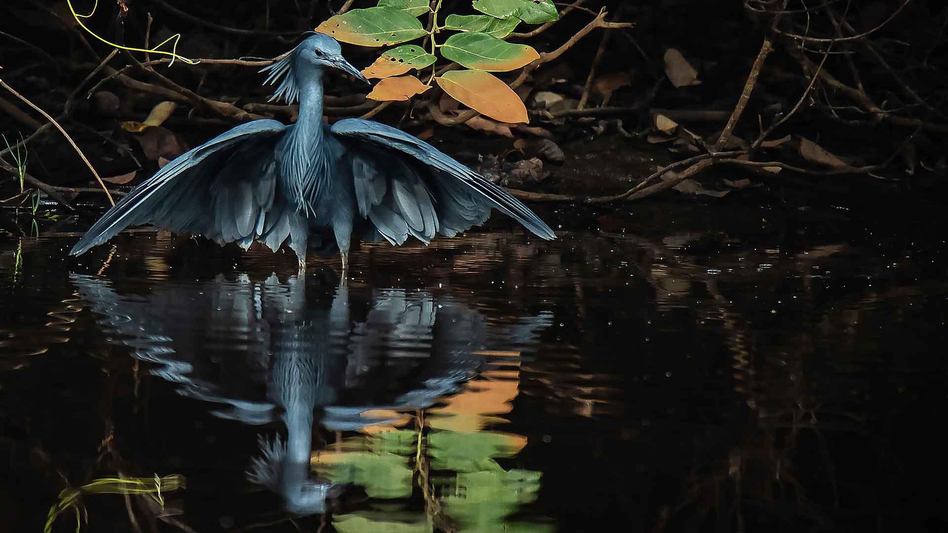 Séjour ornithologique