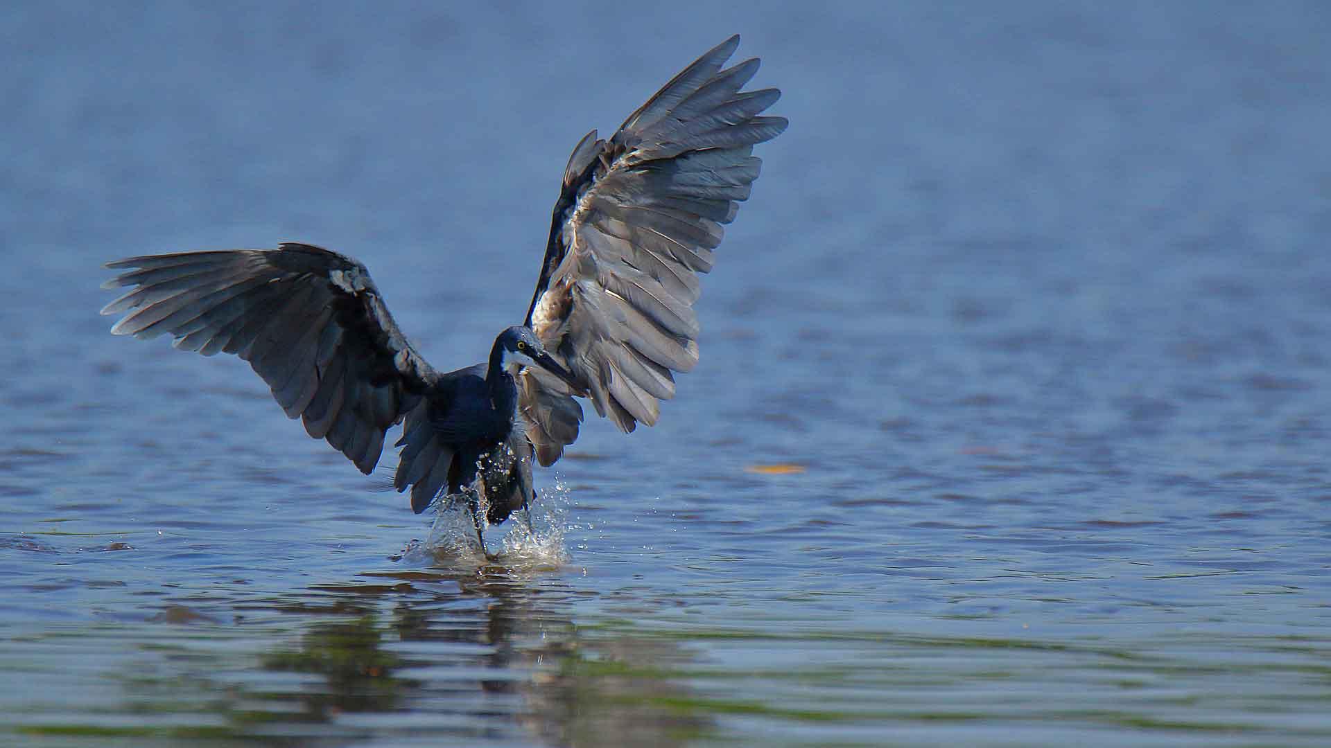 voyage ornithologique au senegal