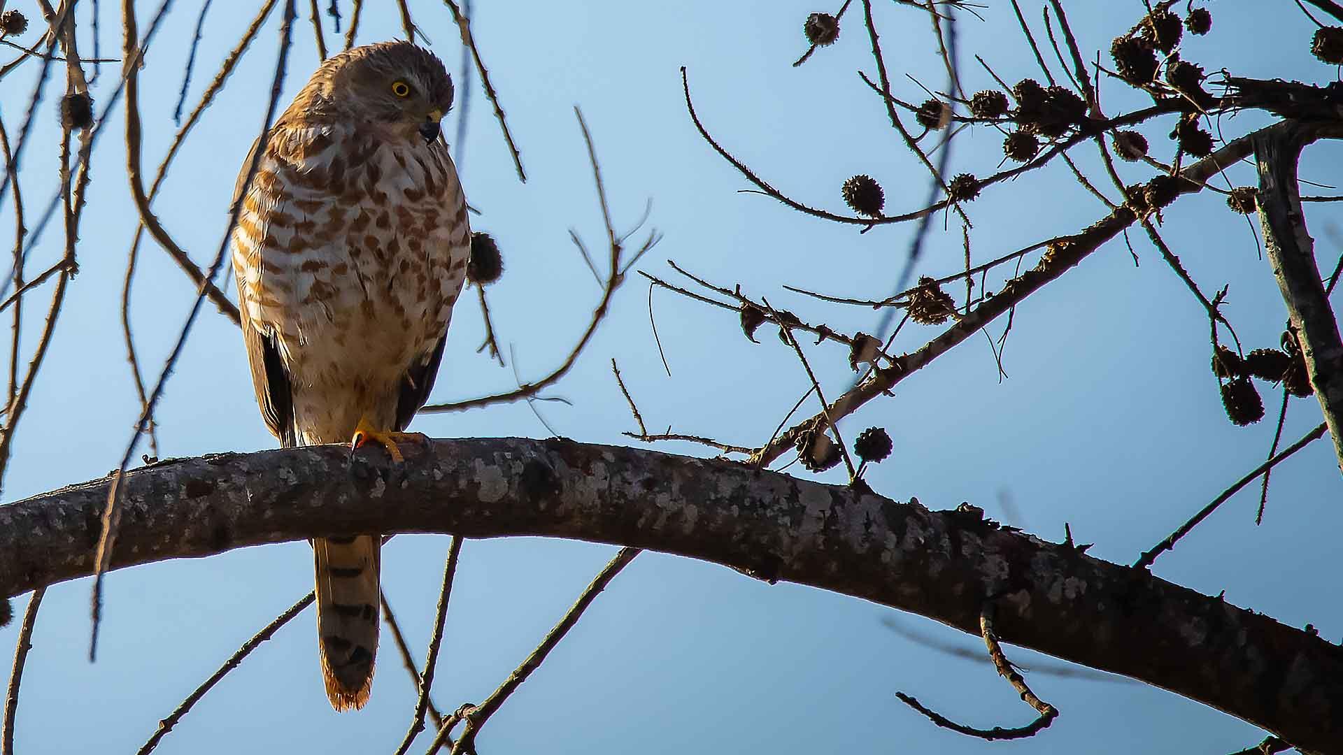 sejour ornithologie