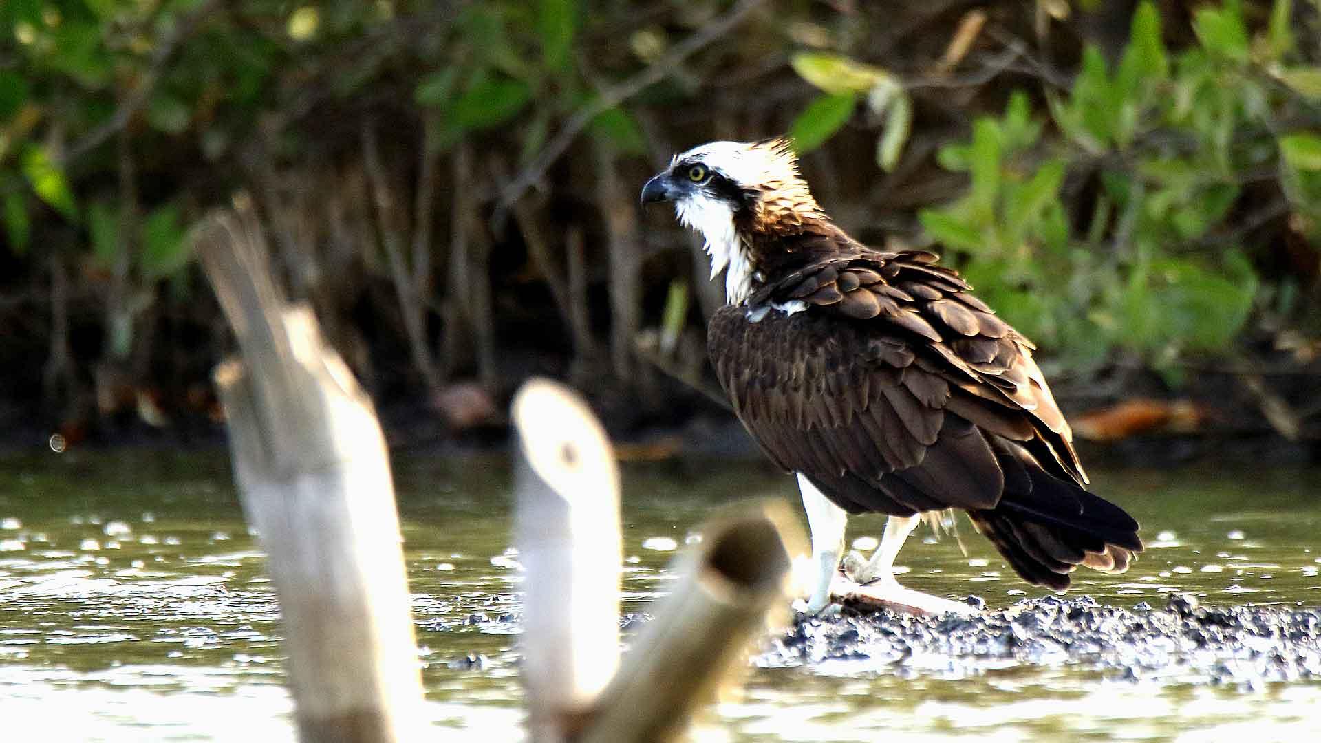 sejour ornithologique en Afrique