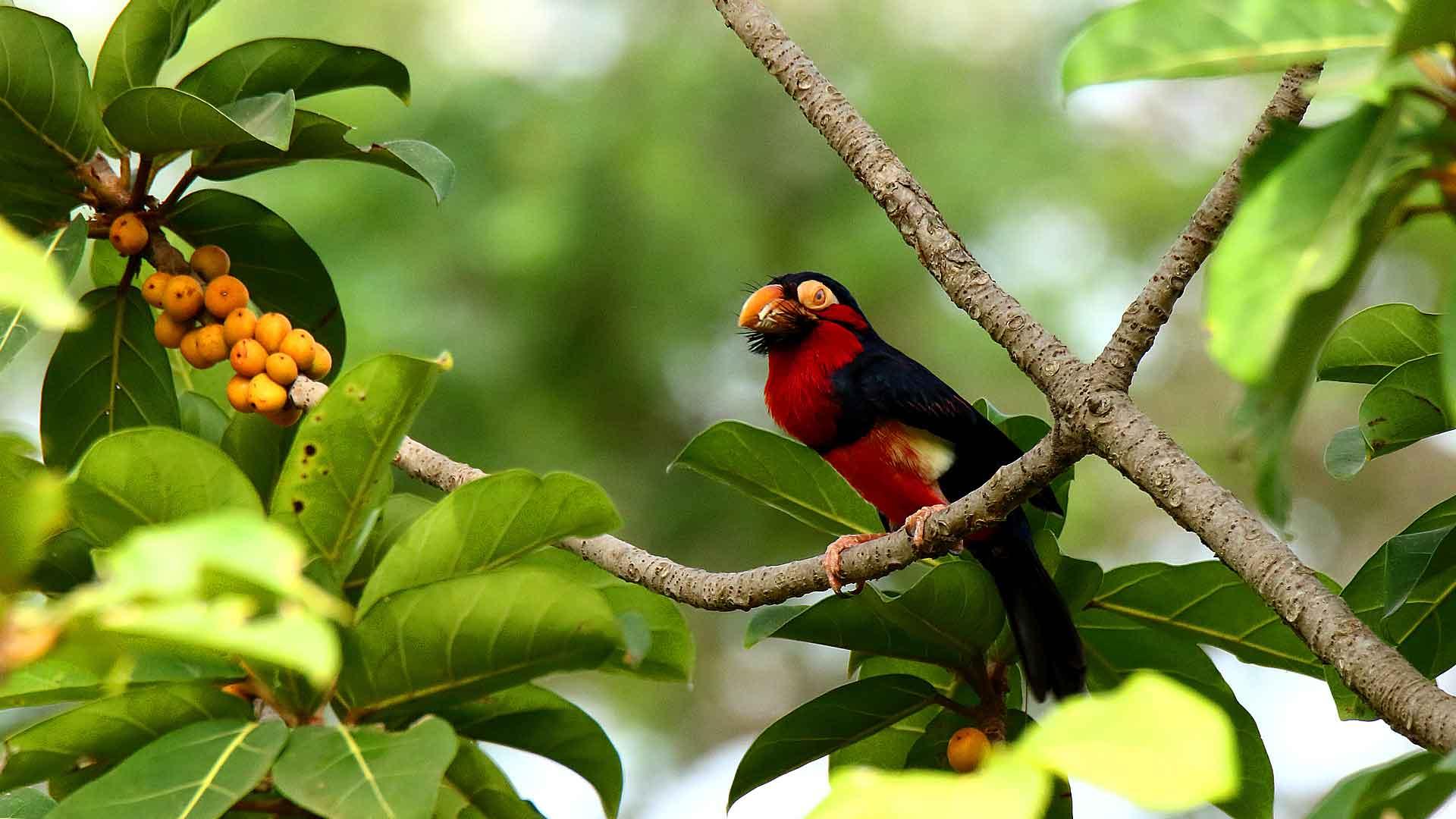 ornithologie au senegal