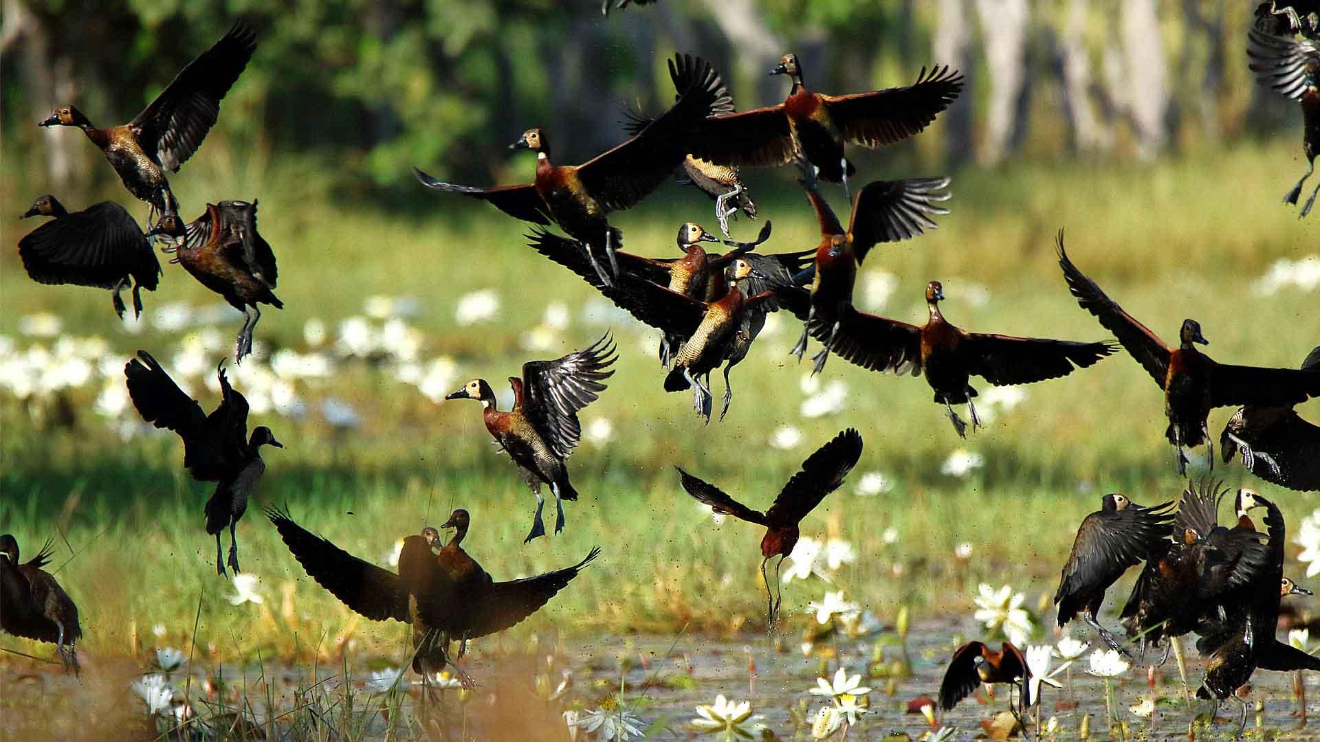 Voyage ornithologique