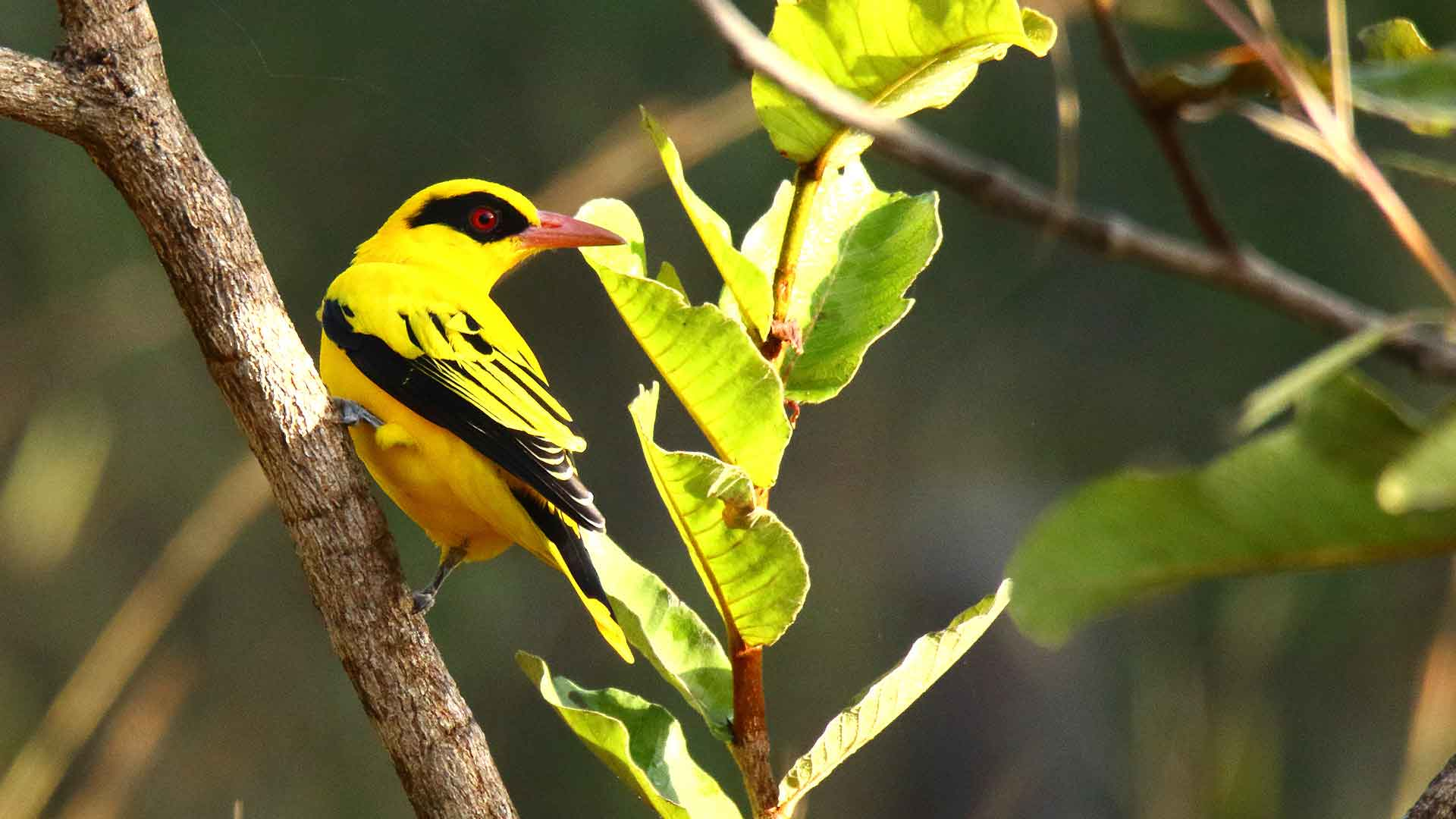 voyage en Afrique oiseaux