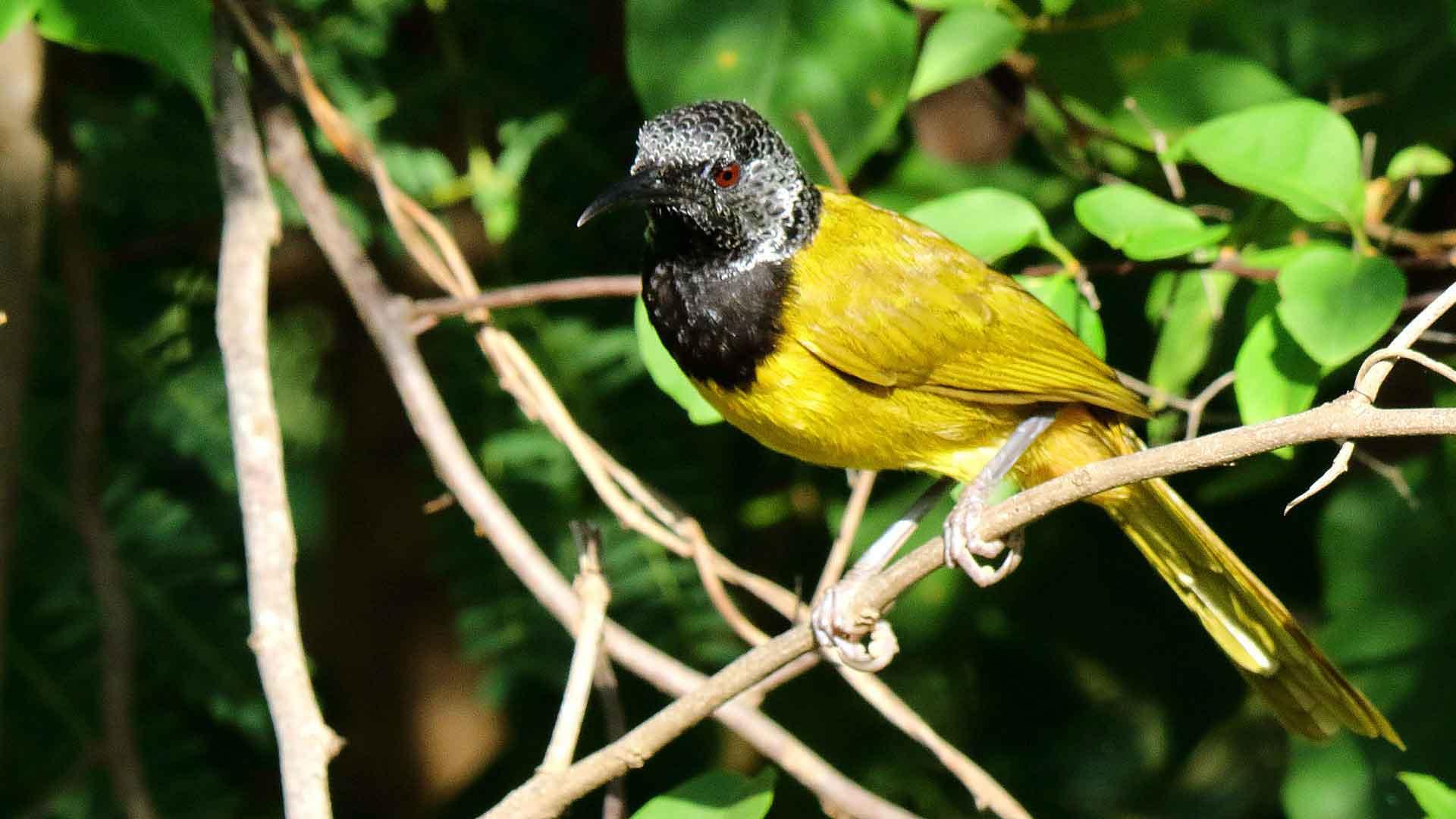 Oiseaux endémique Afrique
