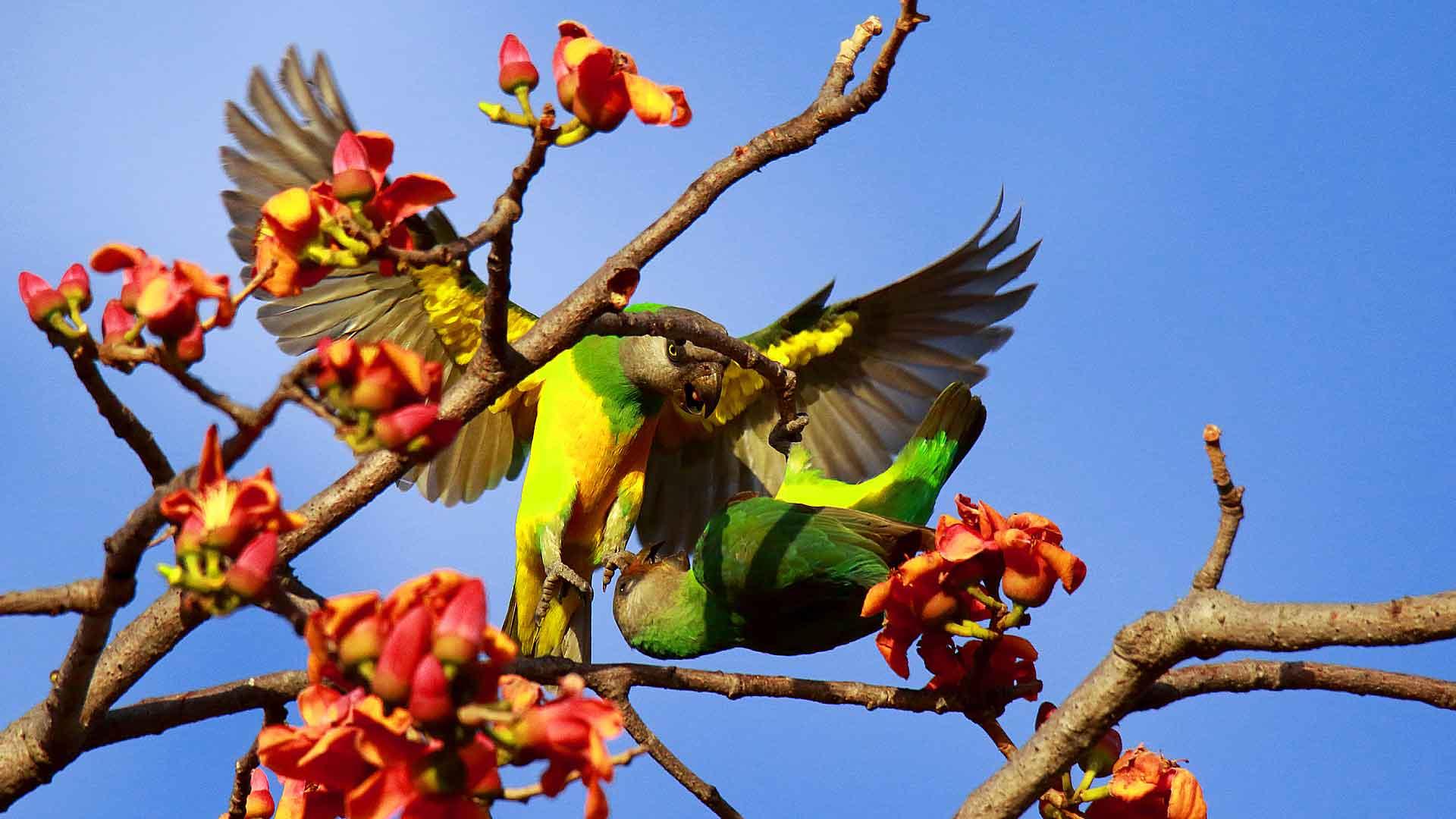 séjour ornithologique en Afrique
