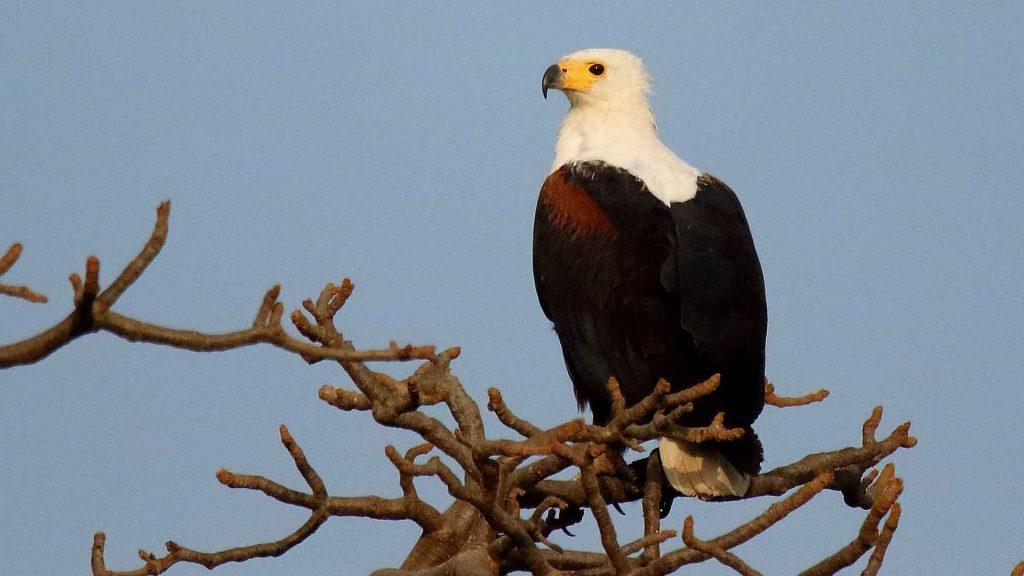 Voyage ornithologique senagl
