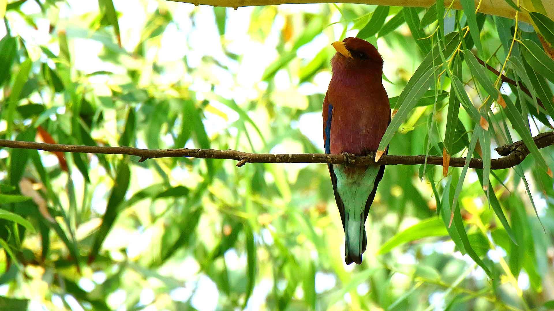 sejour ornithologique