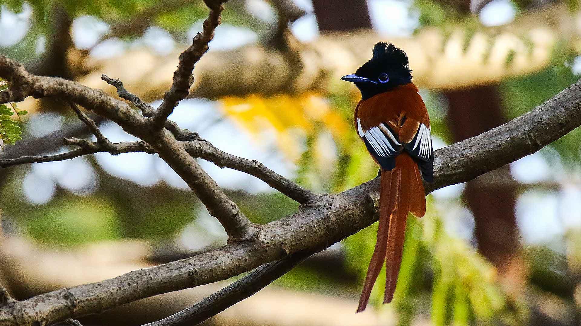 Voyage ornithologique au Sénégal